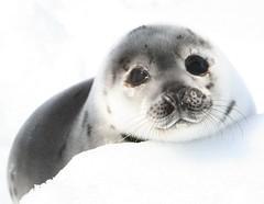 野生動物保育法修法,143種海洋哺乳類動物保育無距離。(照片版權:HSI/R. Aldworth;動物社會研究會提供)