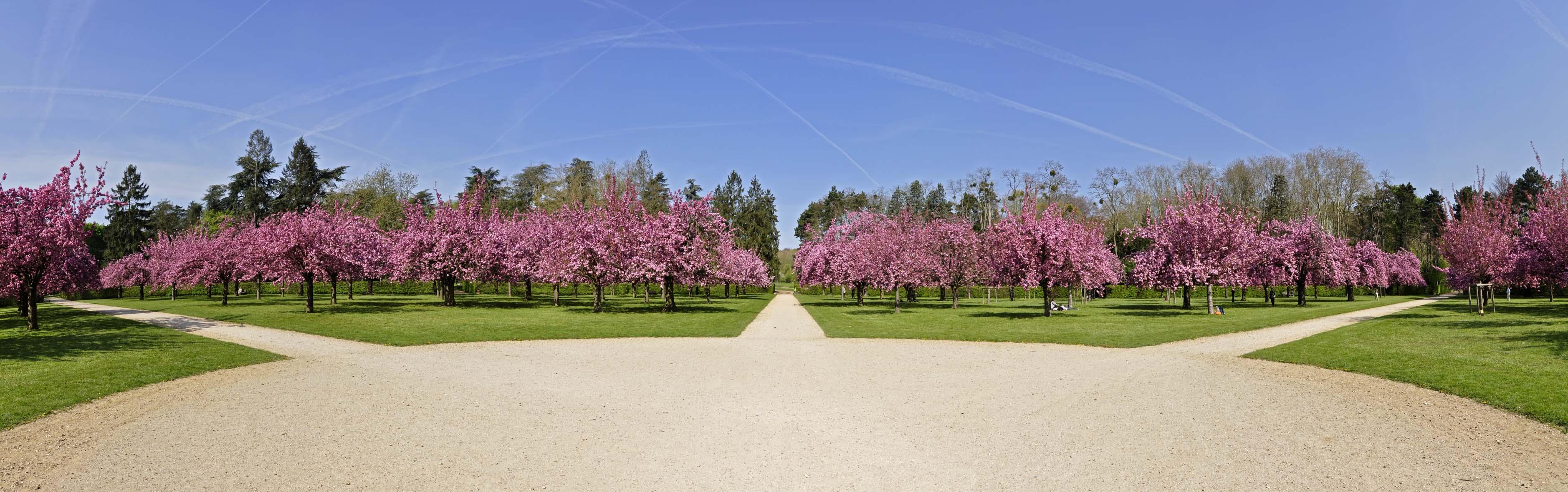 Parc de sceaux panorama des cerisiers en fleurs comment vous dire pascal berger - Parc de sceaux cerisiers en fleurs 2017 ...