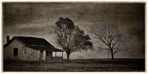 trees winter blackandwhite landscape textures oldhome blackwhitephotos