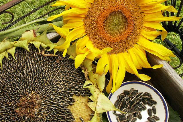 Image Result For Renees Garden