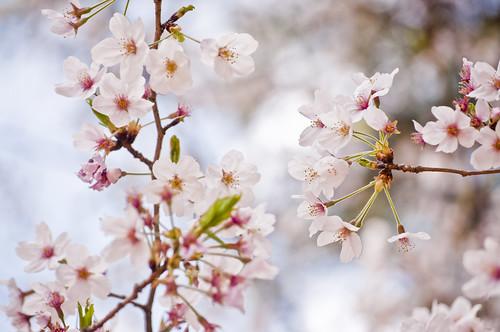 Descanso primaveral