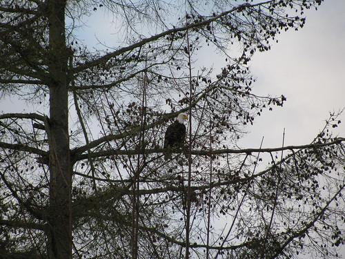 eagle sinclairinlet