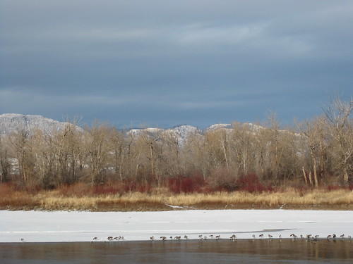 winter snow canada mountains birds river alberta kamloops