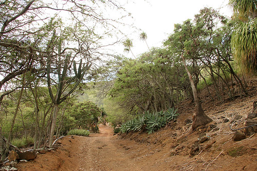 Koko Crater Botanical Garden Postcards From The Trail