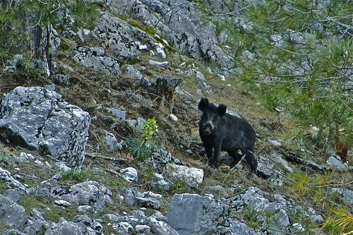 Los 10 mejores sitios para ver animales en semilibertad gt gt el - Videos animales salvajes apareandose ...