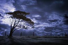 treeoneweb