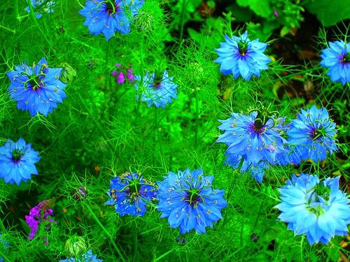 Photo:Flowers By:www.metaphoricalplatypus.com