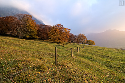 autumn trees sunset mist nature fence landscape liechtenstein deciduoustrees balzers autumnroom
