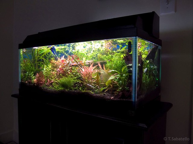 how to cycle a 20 gallon fish tank