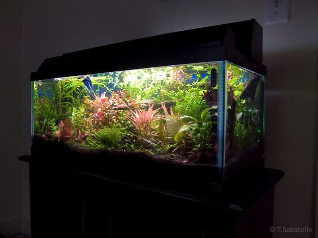 20 gallon aquarium videos 20 gallon aquariums 2017 for Freshwater fish for 20 gallon tank