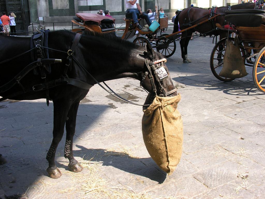 Horse with a feedbag