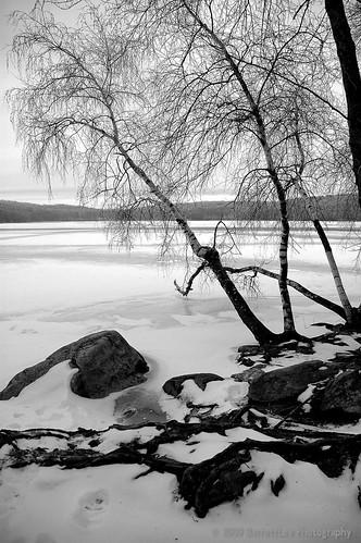 winter white snow black rimeice
