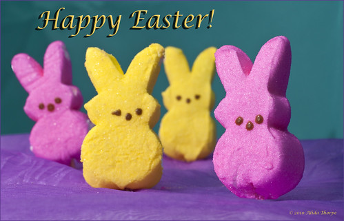 Happy Easter by Alida's Photos