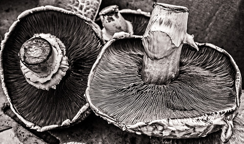 Mushrooms at Farmer's Market -3 (black and white) by joeeisner