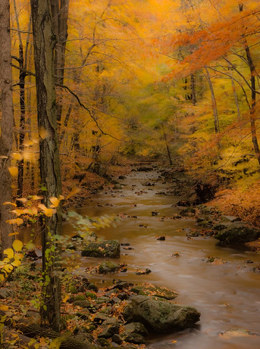 Indian Run Creek Dressed in Autumn