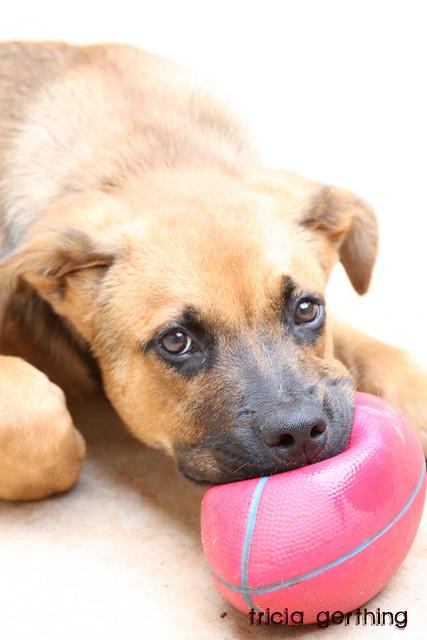 Brownie & his ball