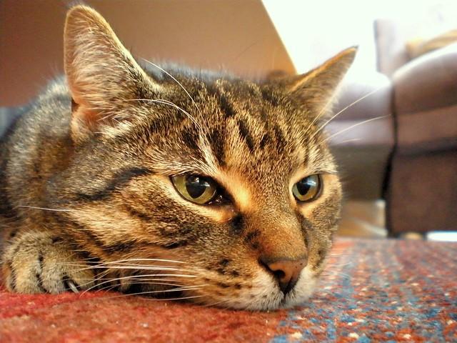 Müde Katze...