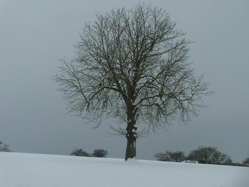 DSCN8468 Tree