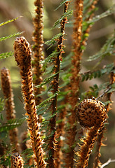 leaf, tree, plant, nature, flora, close-up, ferns and horsetails, plant stem,