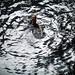 Cenoteswim1 by albaeatscake