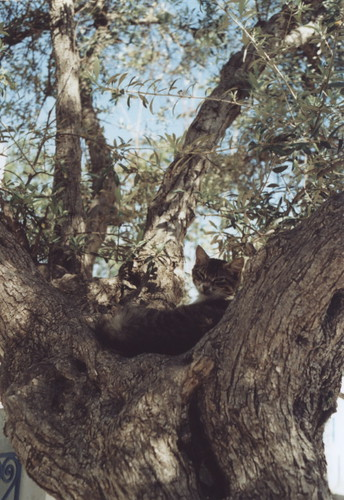 catnap on a tree by +akane+