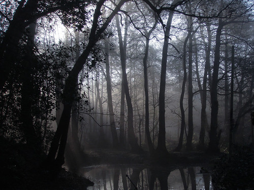 Spooky forest in the morning