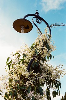 Overgrown_Lamp