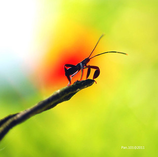 Insect in the sun...