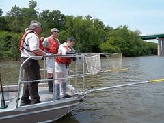 The Aqua kids partipate in electrofishing on the Illinois River. USFWS Photo.
