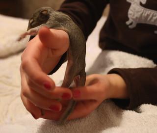 BabySquirrelstanding