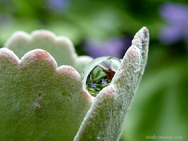 Little flowers reflected in a raindrop
