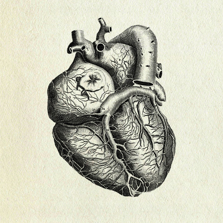 Heart anatomy - a photo on Flickriver