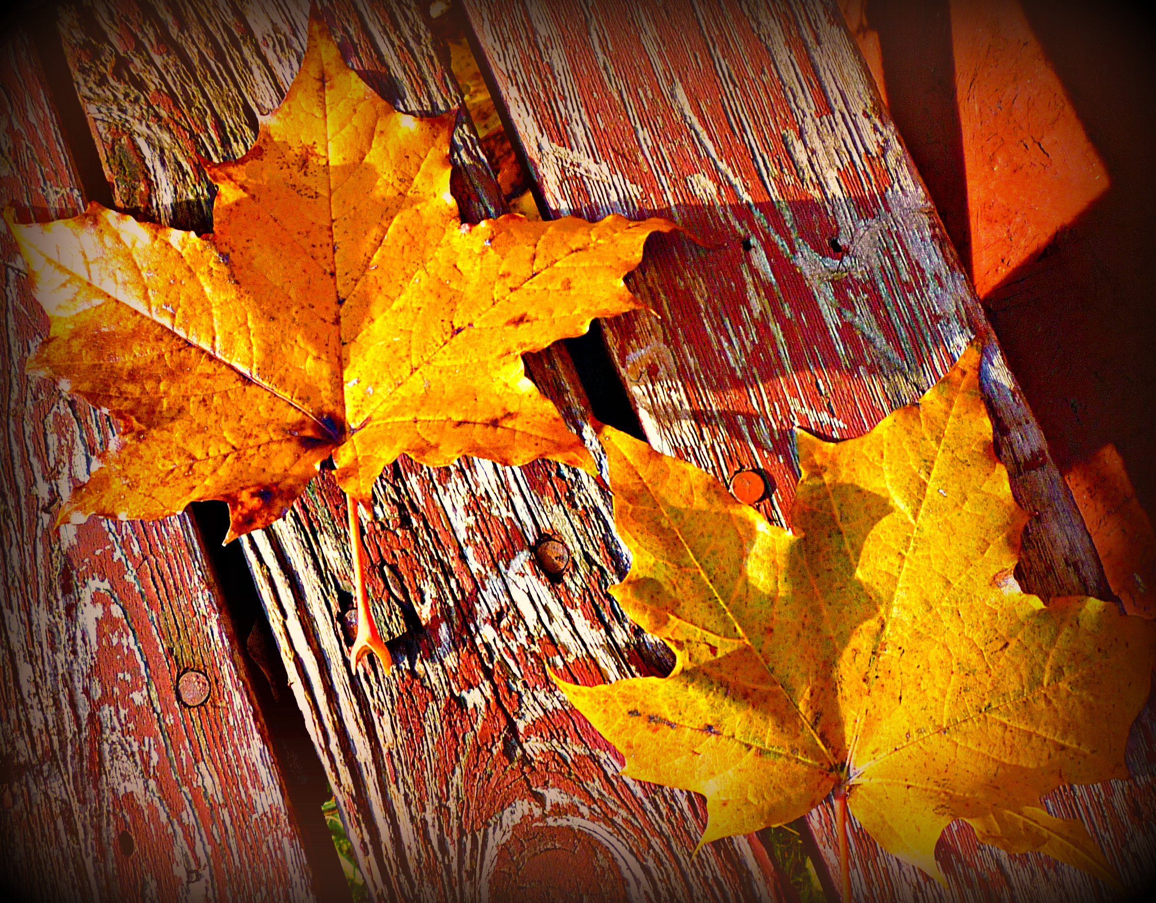 Fall Leaves Photograph...