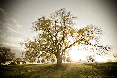 winter sunset tree fall bench whiterocklake ©wadegriffith2010