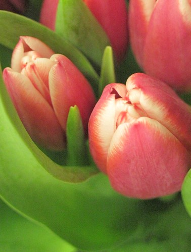 """""""Tulips In The Pink"""" by eagle_eyes_87"""