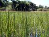 "<a href=""http://www.flickr.com/photos/godutchbaby/4396216315/"">Photo of Demansia olivacea by dutchbaby</a>"