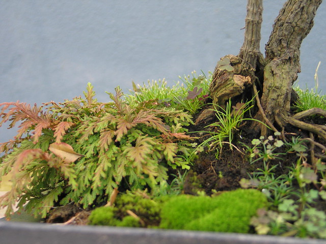 Bonsai soil detail
