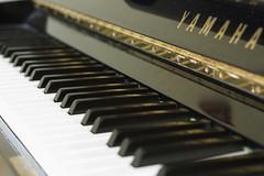 computer component(0.0), string instrument(0.0), electronic device(0.0), nord electro(0.0), electronic keyboard(0.0), electric piano(0.0), digital piano(0.0), string instrument(0.0), celesta(1.0), piano(1.0), musical keyboard(1.0), keyboard(1.0),