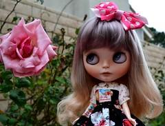 Tiramisu - Chantilly Lace Custom