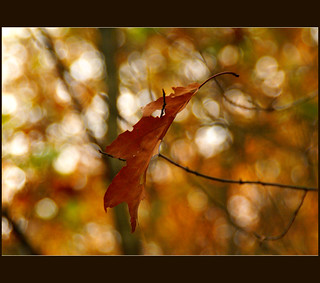 autumn bokeh.......