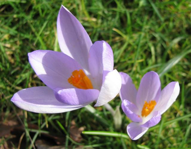 Flori de 8 martie - a gallery on Flickr