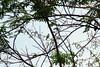 Buscando aves migratorias en el Cerro el Volador