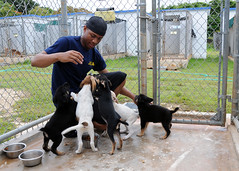 USS Frank Cable Sailor plays with a kennel of puppies at the Guam Animals In Need animal shelter