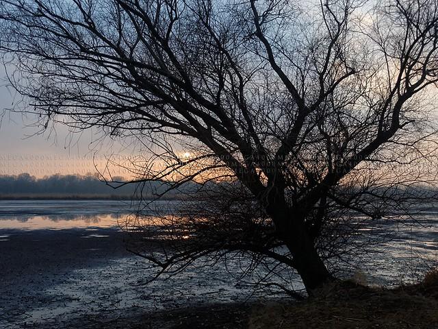Fotó: mega4000 / Hely: Dömsöd / Oroszkóp-tó / Februári este (4032x3024pixel) MegaAirMovie.com