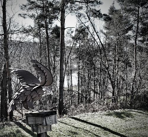 trees woods eagle gimp olympus vignette ep1 c2g 17mm zd