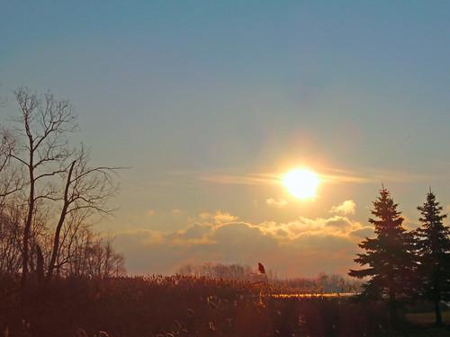 trees lake clouds sunrise michigan marsh erie