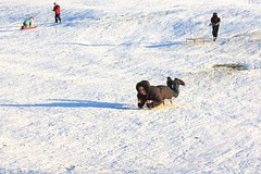 Winter fun, Christchurch Park, Ipswich, 19 December 2009