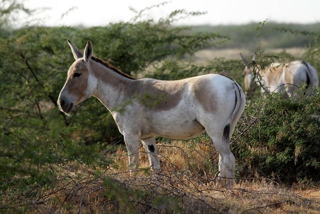 Biodiversity   Biodiversity of India