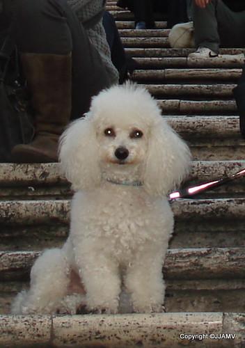 Billy, Spanish Steps, Rome