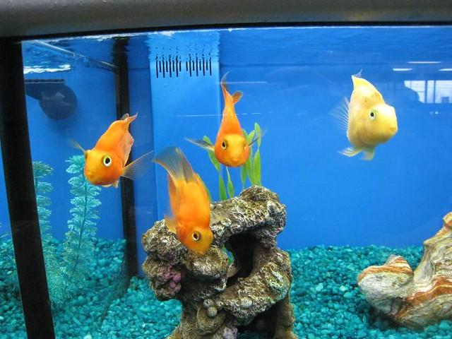 Fish at the pet store b flickr photo sharing for Pet stores that sell fish